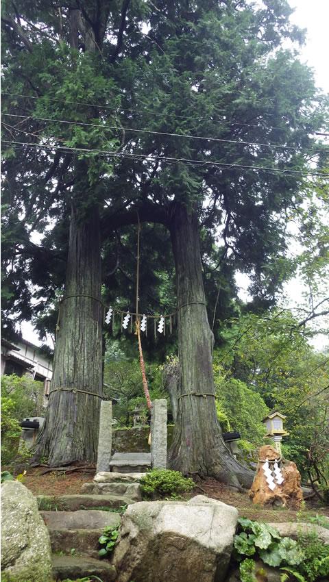 九州お泊りデートにおススメ・武雄神社の縁結びのヒノキ